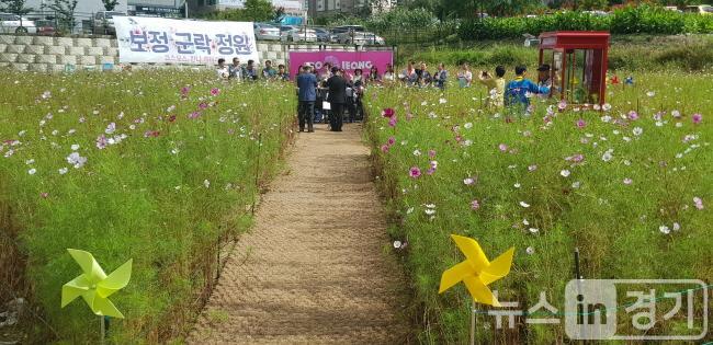 23일 보정동 코스모스 정원 (2).jpeg